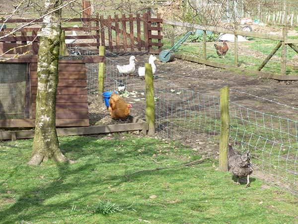 Haworth Accommodation Dog Friendly