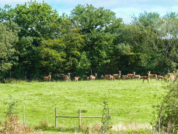Deer Farm Cottage