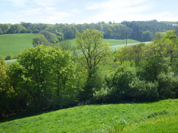 Ramstorland Stag View