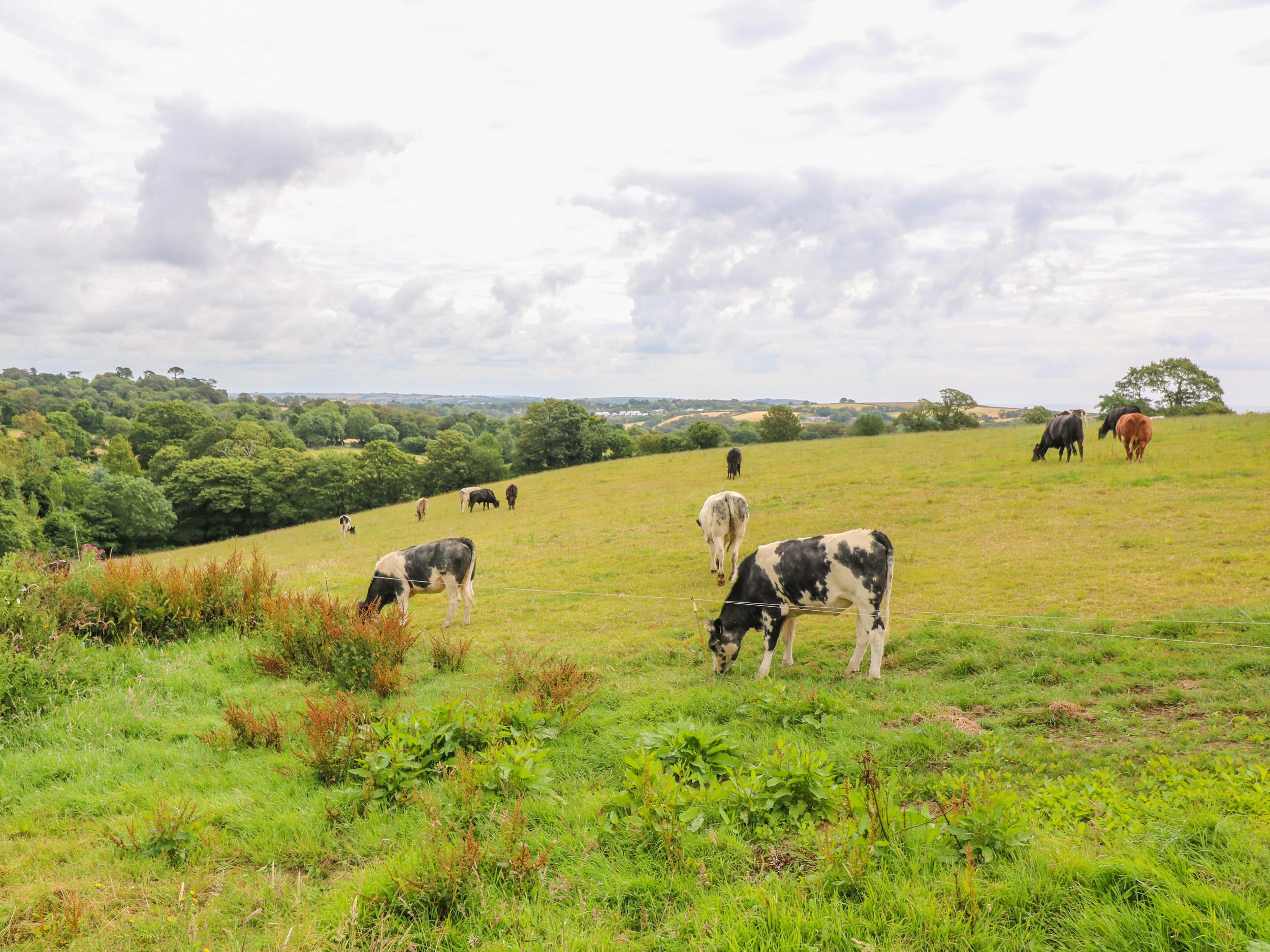 Penwarne Barton Farm