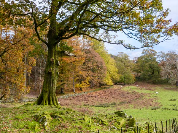 Beech - Woodland Cottages